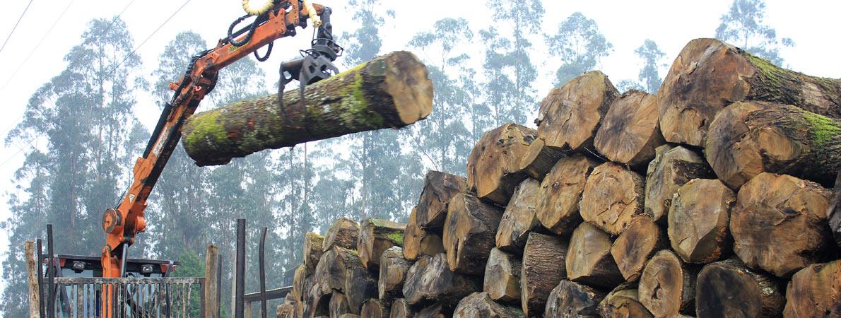Madera de casta o fabrica de maderas aserraderos galicia - Fabricas de madera ...