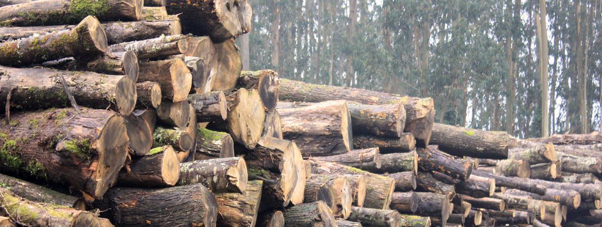 Madera de casta o fabrica maderera galicia - Fabricas de madera ...